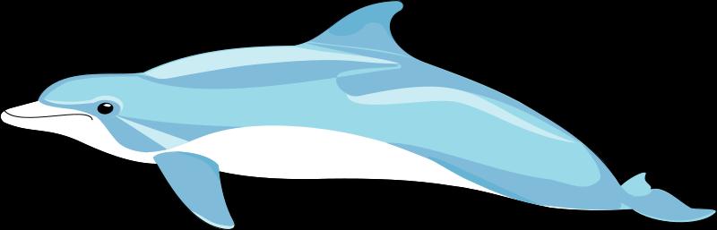 free vector Dolphin 2