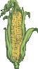 free vector Ear Of Corn Colored clip art