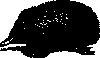 free vector Echidna clip art
