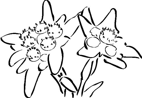 free vector Edelweiss clip art