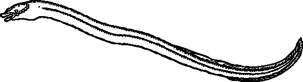 free vector Eel clip art