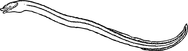 eel clip art free vector 4vector rh 4vector com eel clipart png eel clipart black and white