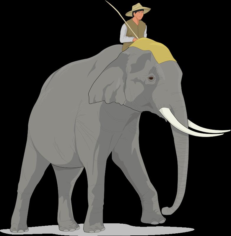free vector Elephant 3