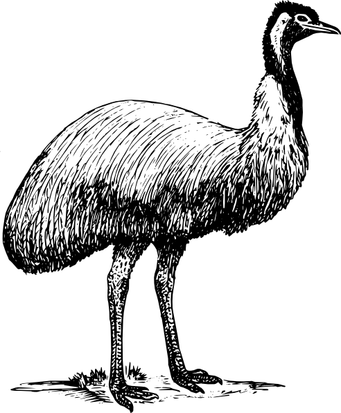 free vector Emu Animal Bird clip art