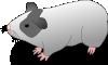 free vector Ernes Cavia Guinea Pig clip art