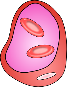 free vector Erythrocyte Red Blood Cell clip art