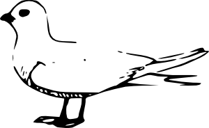 free vector Fairy Tern clip art