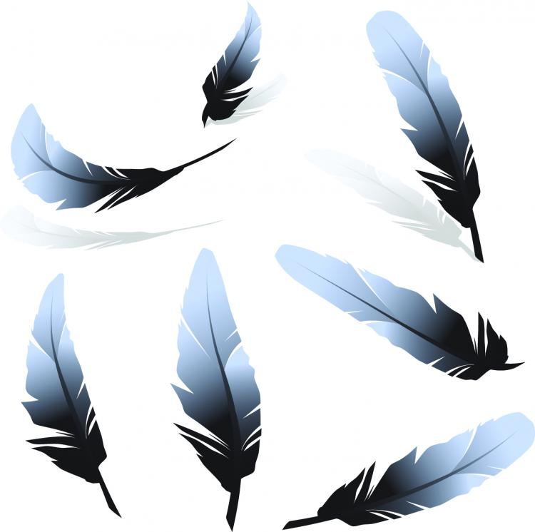 free vector Feather 01 vector