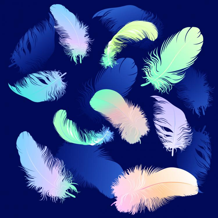 free vector Feathers 04 vector