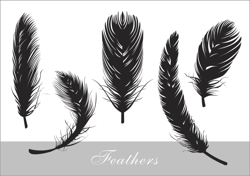 free vector Feathers realistic silhouette vector