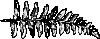 free vector Fern Branch clip art