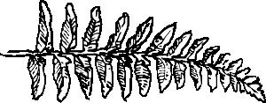 free vector Fernbranch clip art
