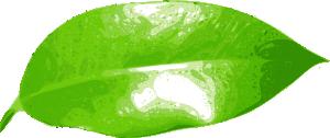 free vector Ficus clip art