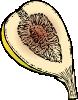 free vector Fig clip art
