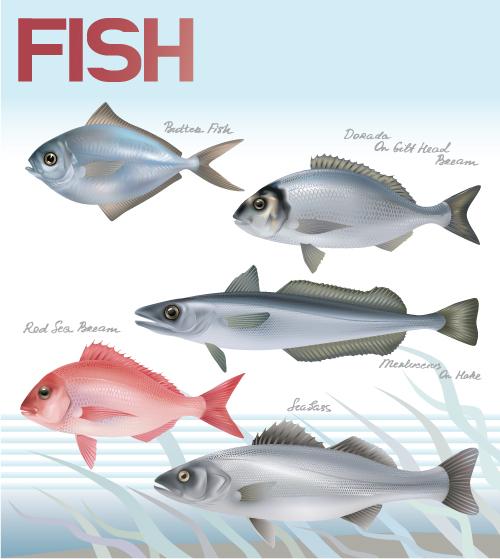 free vector Fish 03 vector