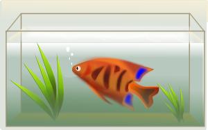 free vector Fish Tank clip art