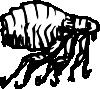 free vector Flea clip art 107423