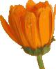 free vector Fleur07 clip art
