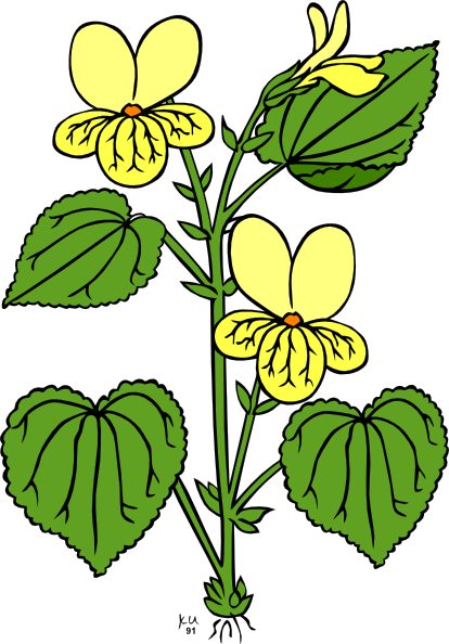 free vector Floral Plant With Green Leaves clip art