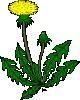free vector Flower Dandelion clip art