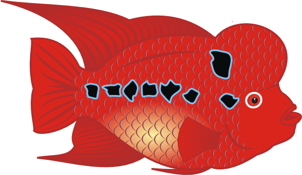 free vector Flower Horn Fish clip art
