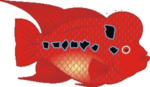 free vector Flower Horn Fish clip art