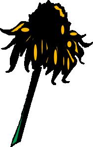 free vector Flower Rudbeckia clip art