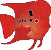 free vector Flowerhorn Fish clip art