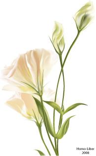 free vector Flowers realistic rendering of vector material