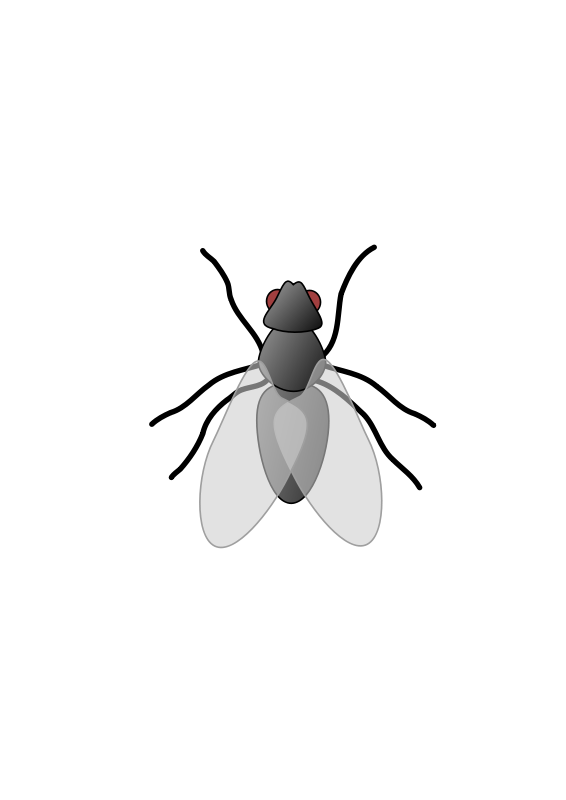 free vector Fly 01