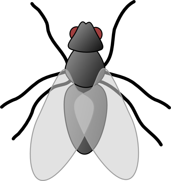 free vector Fly Bug Insect clip art