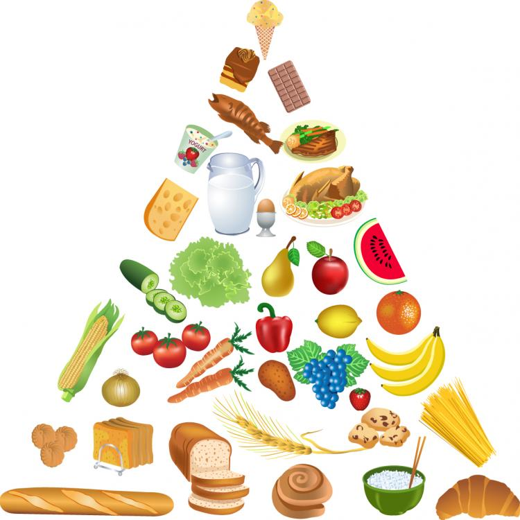 free vector Food pyramid vector