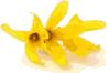 free vector Forsythia clip art