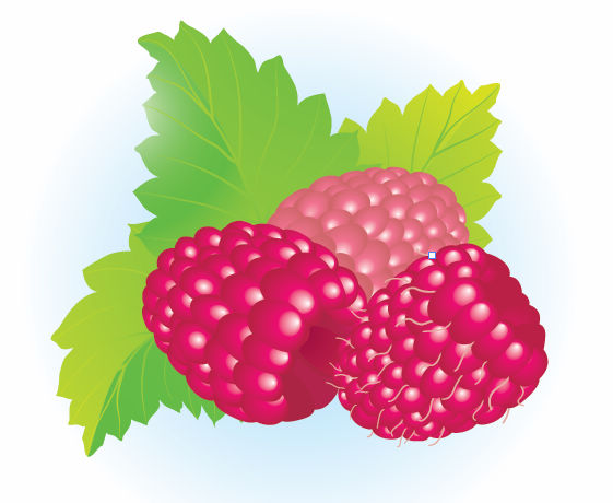 free vector Free Raspberries Vector Illustration