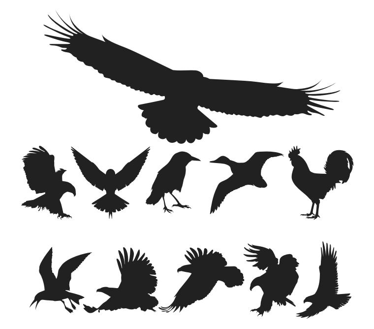 free vector Free Vector Birds Pack