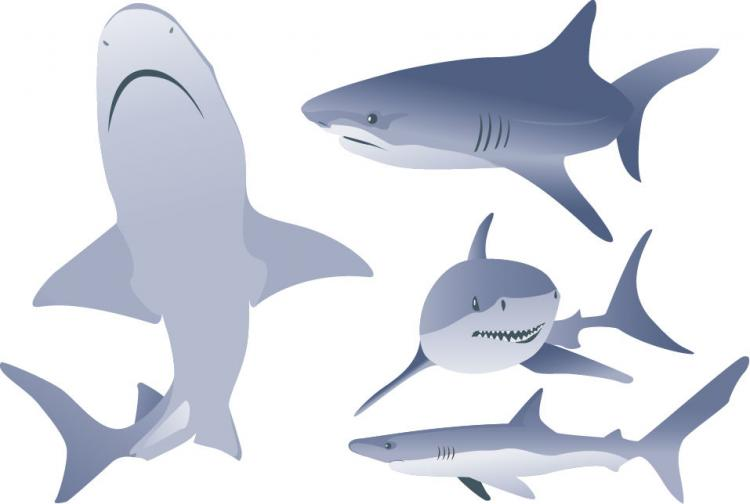 free vector Free Vector Shark Illustrations