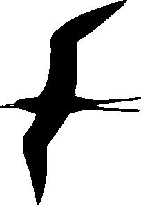 free vector Frigate Bird clip art