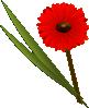 free vector Gerbera clip art
