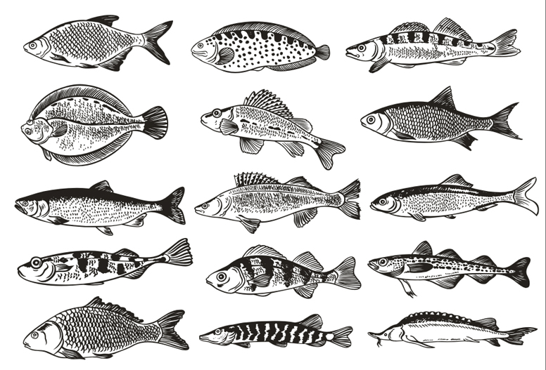 free vector Germany fish monochrome illustrations vector
