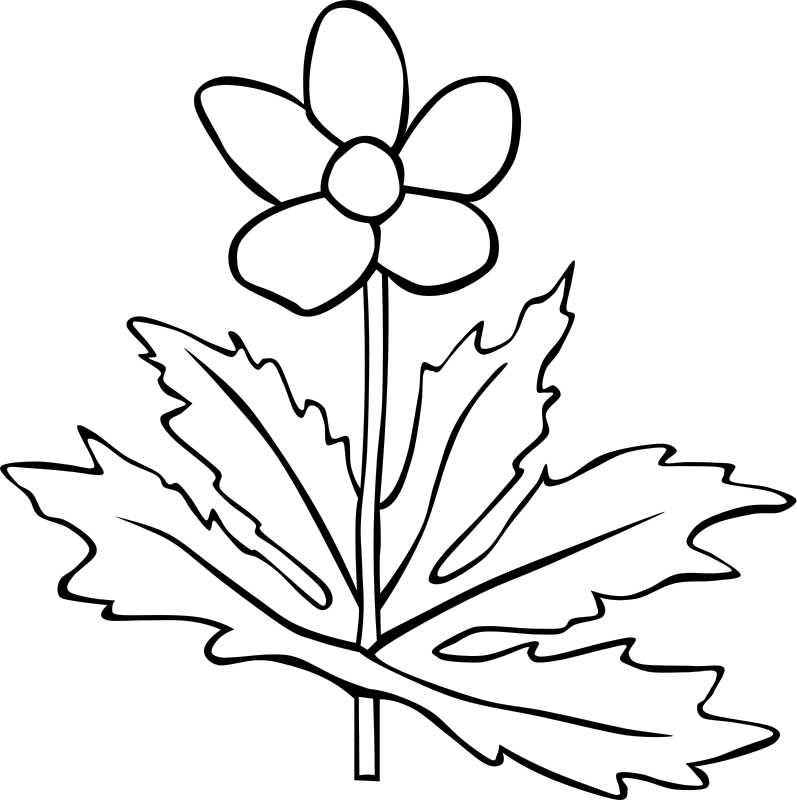 free vector GG anemone canadensis