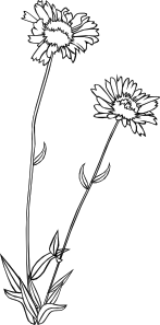 free vector Gg Gaillardia Aristata Outline clip art
