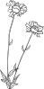 free vector Gg Gaillardia Aristata Outline clip art