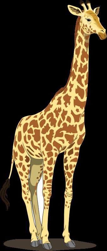 Giraffe 2 Free Vector / 4Vector