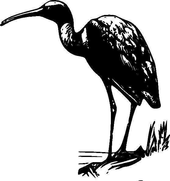 free vector Glossy Ibis clip art