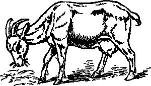 free vector Goat clip art