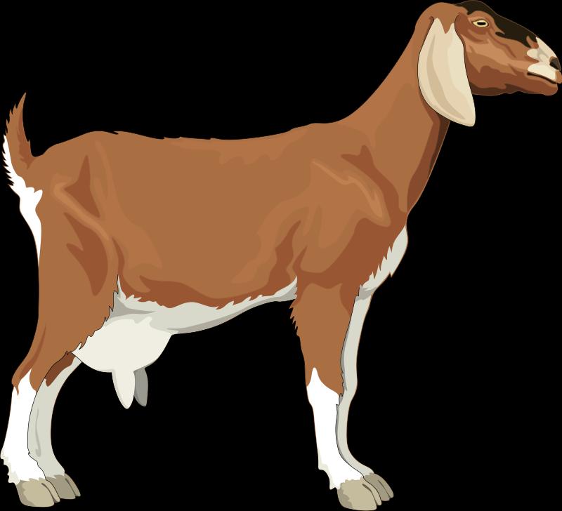 free vector Goat