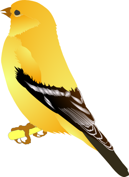 free vector Gold Finch clip art