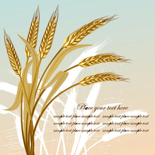 Golden wheat vector Free Vector / 4Vector
