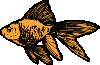 free vector Goldfish clip art