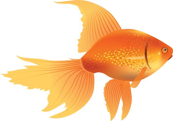 free vector Goldfish vector 3
